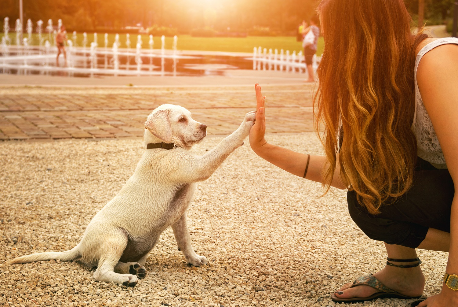 Communication on this topic: How to Be a Good Pet Sitter, how-to-be-a-good-pet-sitter/
